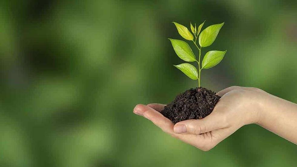 Addiciton Cure Tree of Life